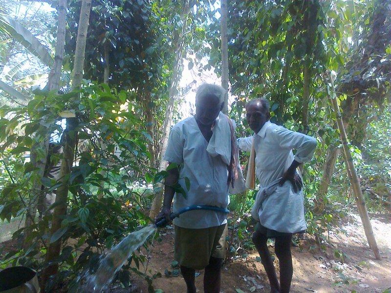 Teak Wood Plantation Costs And Income Farm Advice