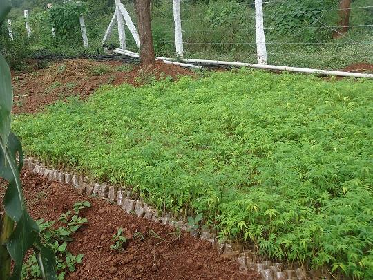 Our Nursery @Chimaldari Land 4